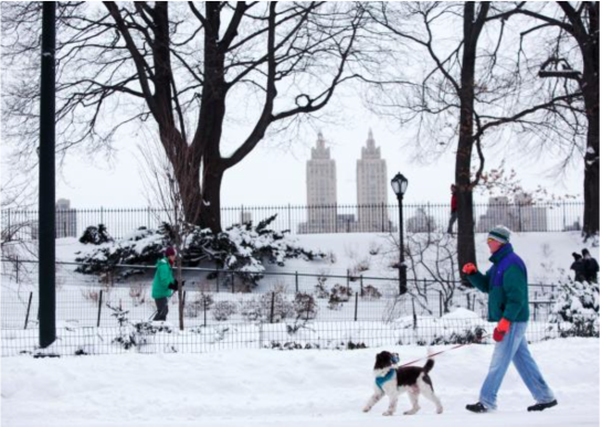 A passerby walks his dog near an accumulation of snow on Jan. 27, 2015, in Central Park in New York. Snow levels in New York have ranged from 7.8 inches in Central Park to more than 28 inches in Eastern Long Island. Photo by Yana Paskova/Getty Images