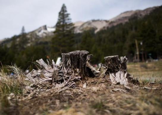 A stump sits at the site of a manual snow survey on April 1, 2015 in Phillips, California. The current recorded level is zero, the lowest in recorded history for California. Photo by Max Whittaker/Getty Images