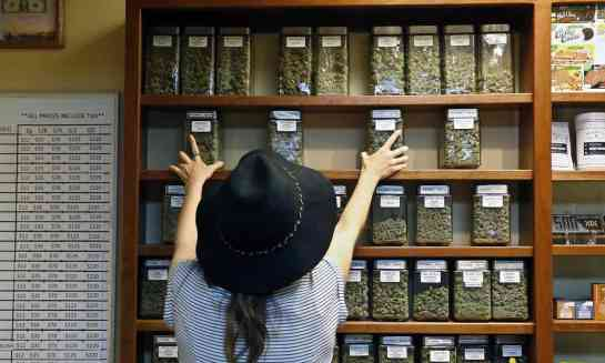 An employee arranges glass display containers of marijuana on shelves at a retail and medical cannabis dispensary in Boulder, Colorado, on 11 August 2016. Photograph: Brennan Linsley/AP